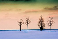 Trees, Winter, Snow