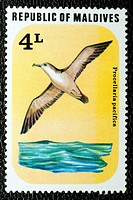 Wedge-tailed Shearwater (Procellaria pacifica), stamp, Maldives