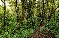 10856767, Ecuador, Cloud Forest, at Guango Lodge,