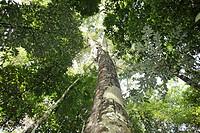 10857638, Brazil, Amazon rainforest, Amazonia, Jun
