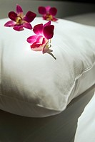 orchids on pillow