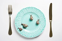 Four snails on a plate
