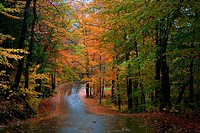 A wet road in autumn in Jackson, NH.