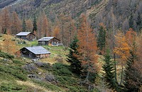 Traditional wooden alpine hut with larches in autumn colours, Lesachalmen, Hochschober range, National Park Hohe Tauern, East Tyrol, Austria