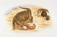 Palaeozoology - Eocene - Pristichampus (art work by Barry Croucher)