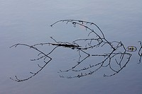 Branches, water, reflection,
