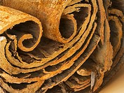 Cinnamon. Coloured scanning electron micrograph SEM of the end of a cinnamon stick. This spice comes from the dried inner bark of the cinnamon tree Ci...