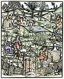 15th century herb garden. Historical artwork depicting a herb garden at the end of the 15th Century. People can be seen working and relaxing in the ga...