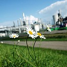 Flowers around an industrial plant. Photographed near Terneuzen, The Netherlands, in September.