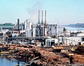 Timber processing plant. View of a timber processing plant with piles of logs for production of wood chips, wood pulp and paper. The logs are debarked...