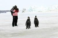 Tourist photographing Emperor Penguins, Antarctica, Aptenodytes foresteri