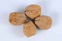Walnuts, Juglans regia