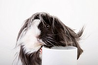 Pet, freigestellt, alfred, animal, animals, beverage (thumbnail)