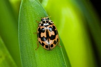wiesenbewohner, alfred, animal, animals, beetle, close_up