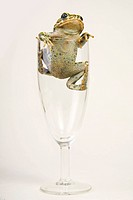 Animals, close, champagne glass, catch, alfred (thumbnail)