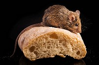 brotkrume, aliment, bread, animals, animal, alfred