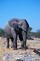 day, africa, blue, animals, African, elephant, Africa