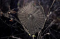 cobweb, bough, close_up, CLOSE, branch, Jan, animals