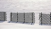 weinviertel, austria, calf, cold, fence, landscape, Lower Austria