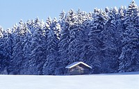 blue, cabin, cold, conifer, coniferae, conifers, cottage