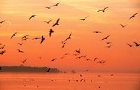 naturstimmung, rohrspitz, animals, atmosphere, austria, birds, calf