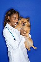 African American young adult female veterinarian holding brown Pomeranian dog (thumbnail)