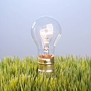 Studio shot of glass light bulb in grass