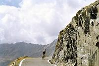 ciclismo, scalata al passo gavia, lombardia, italia