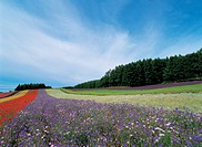 scenic, landscape, scenery, flower, field, flower farm, nature