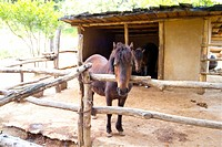 Domestic animal, animal, land animal, mammal, vertebrate, horse (thumbnail)