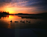 mountain, landscape, swan, lake, scene, tree, nature