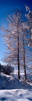 snow scene, landscape, winter, season, scenery, tree, nature