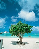 beach resort, seaside, scenic, cloud, resort, nature