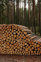 natural, outdoors, environment, arrangement, wood, wooden logs