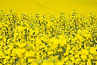 alfred, felder, agroindustry, agriculture, acre, alternativenergie