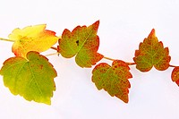 green, autumn, close_up, CLOSE, brown, alfred