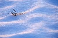 fruehlingserwachen, austria, blade of grass, blanket of snow, calf, eiskristalle, grass