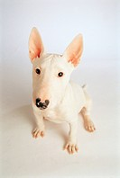 Dog, 35mm, petdog, animal, BullTerrier, mammal, film (thumbnail)