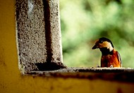 Animal, nature, wild, structure, window, vertebrate, landscape (thumbnail)