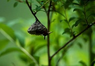 tree, nature, branch, wasp, beehive, animal, landscape