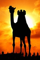 silhouette, dubai, camel, sunset, sunrise