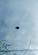 animal, nature, branch, spider web, scene, arthropod, landscape