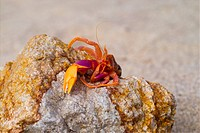 seashore, sea, crawfish, rock, sand, animal, natural