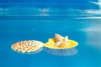 mollucca, animal, mollusc, mollusks, mollusk, shellfish, shell