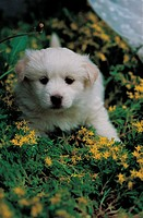 puppy, dog, canines, domestic, flower, pup