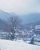 season, scenery, snow, tree, field, winter, nature