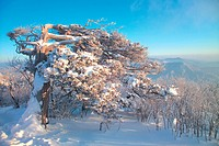 Scenery, winter, landscape, mountain, tree, scene, season (thumbnail)