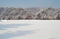 landscape, snowy, background, snowfield, winter, tree, snow