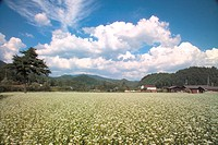 flower, cloud, landscape, scenery, nature, country, sky