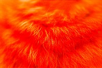 closeup, background, close_up, close up, artificial, fabric, cloth